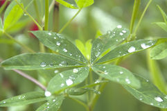dewdrops Lizenzfreie Stockbilder