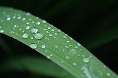 dewdrops Lizenzfreie Stockfotos