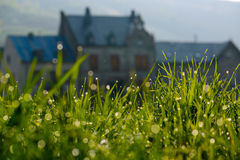Dewdrops auf Gras Lizenzfreie Stockfotos