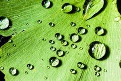 Dewdrops Royalty Free Stock Photos