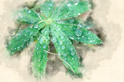 Dewdrops. Drops of dew on the leaves of plants. Watercolor background Royalty Free Stock Images