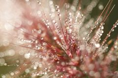 Dewdrops on flowers leaf, close-up water drop, Fresh spring grass with water drops, morning summer backgrounds, macro world, tiny. Focus, commercial Stock Photos