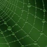 Dewdrops freschi di mattina sullo spiderweb Fotografie Stock