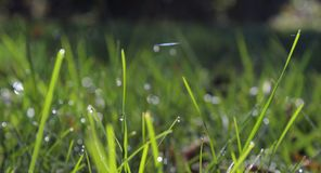 Dewdrops on the Grass. Drops of dew on the grass Royalty Free Stock Photo