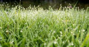 Dewdrops on the Grass Stock Image