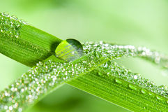 Dewdrops on the grass leafs Royalty Free Stock Photo