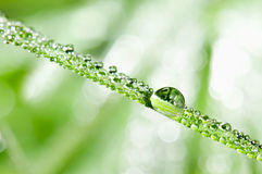 Dewdrops on the grass leafs Stock Image