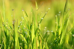 Dewdrops on grassfield. Close up of dewdrops on grassfield in the morning Stock Photography