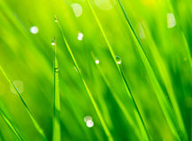 Dewdrops on green grass Stock Image