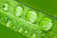 Dewdrops on the green grass leaf Stock Photography
