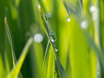 Dewdrops on the green grass in sunlight Royalty Free Stock Photos