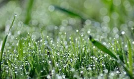 Dewdrops  on the green grass Royalty Free Stock Photo