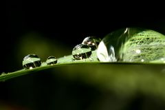 Dewdrops on a green leaf. Dewdrops on a green leaf in twilight after a rain Royalty Free Stock Photo