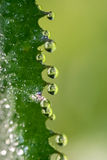 Dewdrops. Green leaf with dewdrops in morning Stock Images