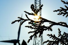 Dewdrops na cyprysie obrazy stock