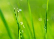 Dewdrops na grama verde Fotografia de Stock
