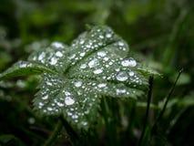 Dewdrops na liściu obrazy stock
