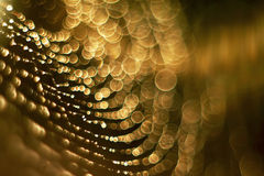 Dewdrops na pająk sieci zdjęcia royalty free