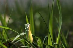 Dewdrops na trawie Fotografia Royalty Free