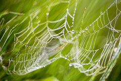 Dewdrops on spider web Stock Images