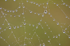 Spiderweb with dew drops Royalty Free Stock Photos