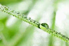 dewdrops trawy liść obraz stock