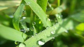 dewdrops uszeregowywający w ranku obraz stock