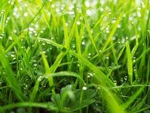 Dewdrops w ogródzie obrazy stock