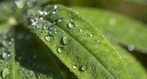 Dewdrops2 Fotos de archivo