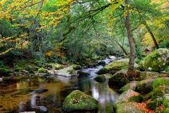 Dewerstone drewien jesień 028 jpg Zdjęcia Stock