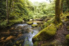 Magnificent woodland scenery in Dewerstone Woods on the southern edge of Dartmoor, Devon, England royalty free stock photography
