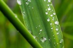 Dews na trawie Fotografia Stock