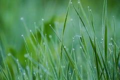 Dews na trawie Obraz Stock