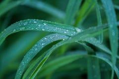 Dews na trawie Zdjęcie Stock