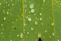 Dews na trawie Obrazy Royalty Free