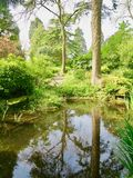 Reflections of the trees. Dewstow Gardens Caerwent Caldicot Wales united kingdom royalty free stock photography