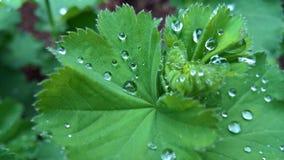 Dewy Blätter Stockfotos