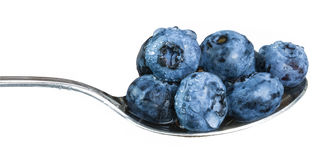 Dewy blueberries on a spoon. Fresh washed blueberries full of vitamins on glossy stainless steel spoon. Isolated on a white background stock photos