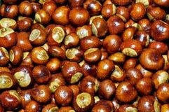 Dewy chestnut Royalty Free Stock Photo