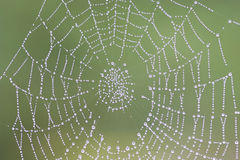 Dewy cobweb Stock Photo