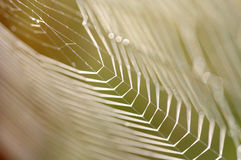 Dewy cobweb Stock Images