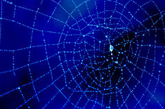 Dewy cobweb in blue. Close-up of the dewy spider�s web Stock Photo
