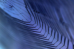 Dewy cobweb in blue Royalty Free Stock Photos