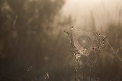 Dewy Cobweb Early Morning in Autumn Backlit Royalty Free Stock Image