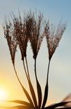 Dewy dandelion flower Stock Image