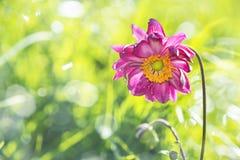 Dewy flower Stock Photo