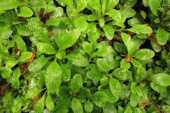 Dewy forest floor Stock Photography