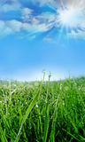 Dewy grass Stock Images