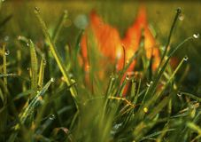 Dewy grass with autumn leaves stock images