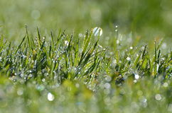 Dewy grass background Royalty Free Stock Photography